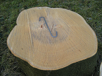 Trunk with S-hook inserted